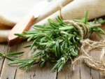 Rosemary Aroma Can Boost Memory In Kids