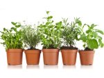 Best Medicinal Plants To Grow At Home