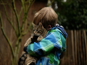 Things That Each Cat Lover Needs Know
