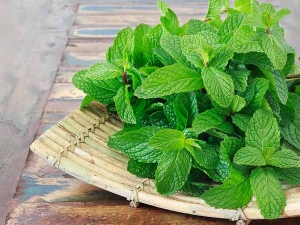 Ways To Lose Weight With Mint Pudina Leaves