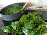 Is Chlorophyll Beneficial To Humans