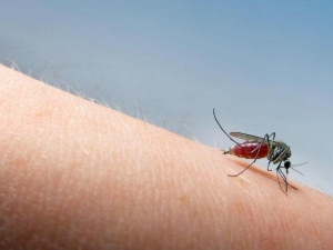 Do Mosquitoes Target Certain Blood Types