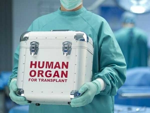 Organ Donation Day Organs You Can Donate