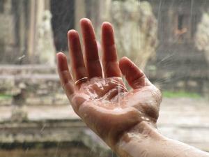 Monsoon Immunity Boosting Foods To Fight Diseases Like Dengue