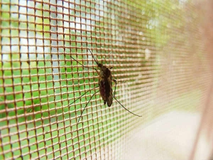Breakthrough In Malaria Treatment Found Study