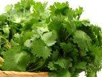 Natural Ingredient For Cleansing Pancreas Liver Kidneys