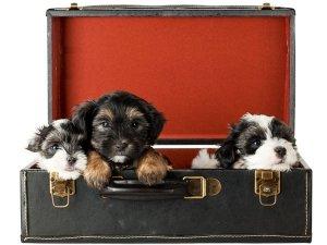 Ways To Take Care Of Dogs During Diwali