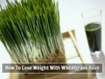 Wheatgrass Juice For Weight Loss