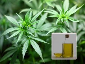 Cannabis Oil Health Benefits
