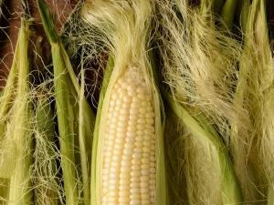 Amazing Health Benefits Of Corn Silk