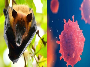Everything You Need To Know About The Nipah Virus