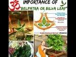 Importance Of Worshipping A Bilwa Tree On A Monday