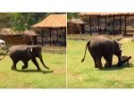 Video Of Elephant That Rushed To Save Caretaker When He Was Attacked