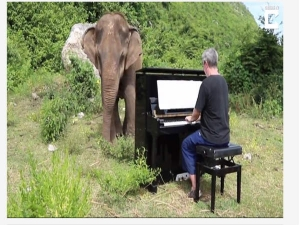 Classical Pianist Plays To A Blind Elephant