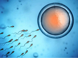 Causes Of Infertility In Male And Female
