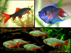 Vastu Tips For Fish Aquariums At Home
