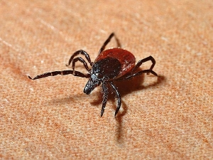 Tick Bites In Children Symptoms Diagnosis Treatment And Home Remedies