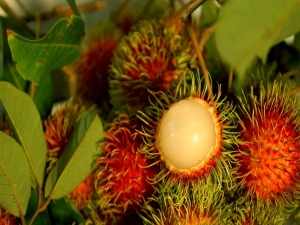 Rambutan Health Benefits Uses And More