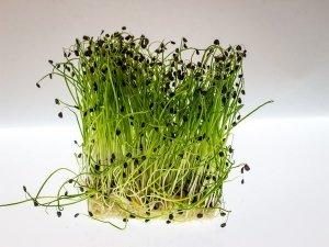 20 Amazing Health Benefits Of Watercress, Nutrition & Recipe