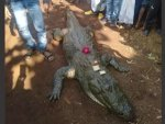 Villagers Mourned The Death Of A Crocodile That Was 130 Years Old