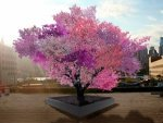 Tree Grows 40 Different Types Of Fruits