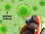 How To Prevent Nipah Virus Infection