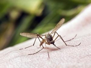 Dengue Symptoms Causes Treatment Prevention