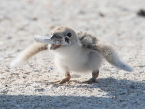 Heartbreaking Image Shows Bird Feeding Cigarette Butts To Its Baby