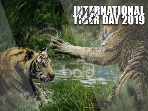 International Tiger Day Quotes And Slogans