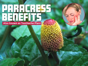 Health Benefits Of Paracress