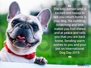 National Dog Day History Significance And Messages