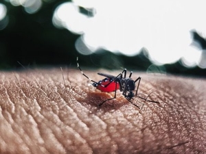 Dengue Alert In Bangalore The City Reports 500 Cases
