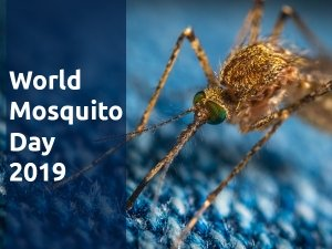 World Mosquito Day 2019: History, Significance And Facts About Mosquitoes