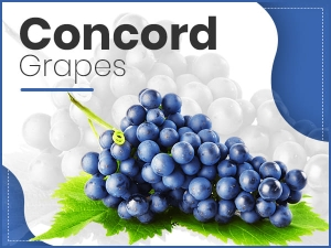 Concord Grapes Nutrition Benefits Side Effects Recipe