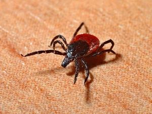 List Of Tick Borne Diseases