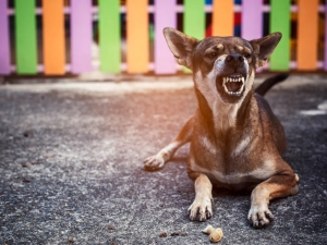 Rabies In Dogs Causes Symptoms Risk Factors And Treatment