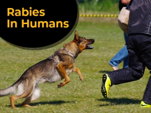 Rabies In Humans Causes Symptoms Risk Factors Treatment And Prevention