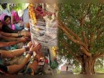 Religious Trees And Plants In India