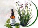 Health Benefits Of Palmarosa Oil