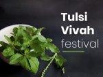 Tulsi Vivah 2019 Festival Puja Vidhi Significance