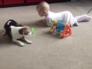 Dog Teaching Human Baby To Crawl Will Melt Your Heart