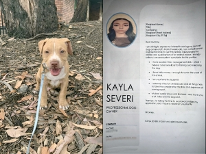 Get That Girl A Puppy Teenager Writes A Professional Cv Convince Her Mother To Bring Home A Puppy