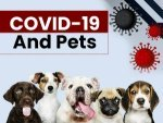 Are Pets At The Risk Of Coronavirus