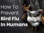 How To Prevent Bird Flu In Humans