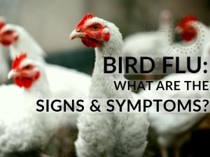 Bird Flu Causes Symptoms Risk Factors Treatment Prevention