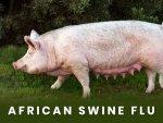 African Swine Flu Symptoms Treatment Prevention