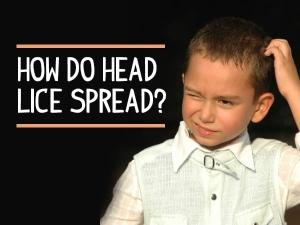 Head Lice Symptoms Risks Treatment Prevention