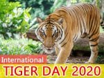 International Tiger Day Interesting Facts About Tigers