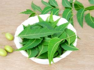 How To Use Neem Leaves For Dandruff