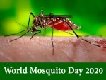 World Mosquito Day History Significance And Facts About Mosquitoes